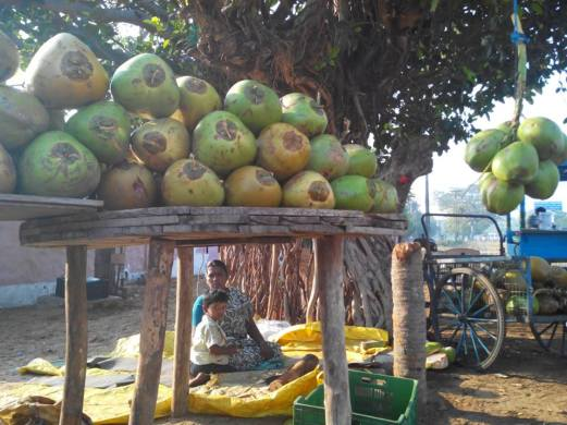 Woman selling tender coconut water on the way to Tambaram. Photo by Rakesh.