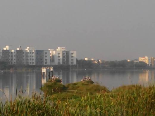 Birds and buildings at Medavakkam. Photo by Rakesh.